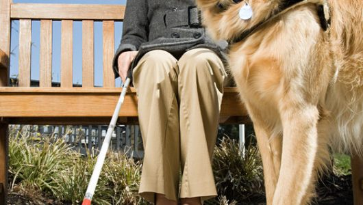 49849981 - blind woman and a guide dog